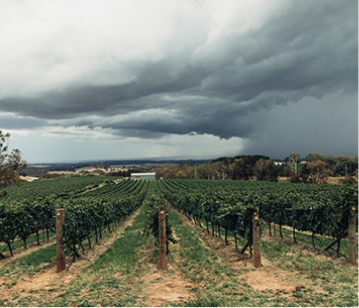 Australian Wine Industry Standards of Sustainable Practice – Winery – Edition 1.1 (AWISSP – WIN1)